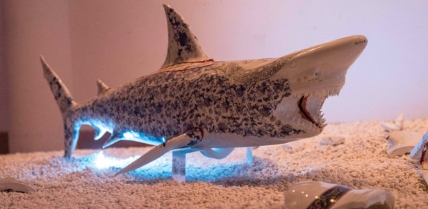 köpekbalıkları 6